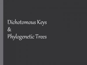 Dichotomous Keys Phylogenetic Trees What if we find