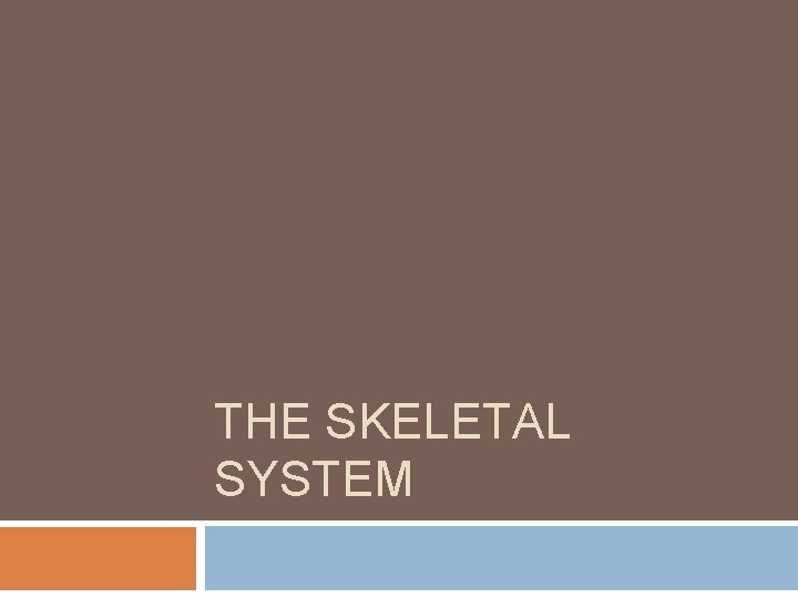 THE SKELETAL SYSTEM The Skeletal System The skeletal