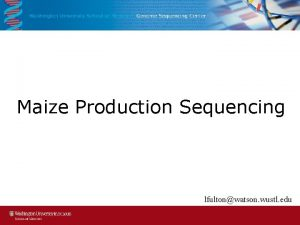 Maize Production Sequencing lfultonwatson wustl edu Maize Production