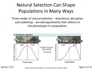 Natural Selection Can Shape Populations in Many Ways