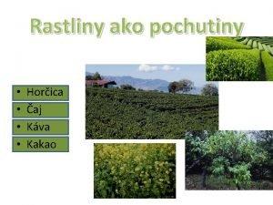 Rastliny ako pochutiny Horica aj Kva Kakao ajov