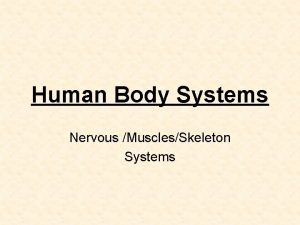 Human Body Systems Nervous MusclesSkeleton Systems Human Body