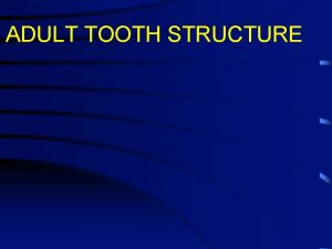ADULT TOOTH STRUCTURE Teeth 1 In adult humans
