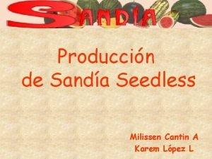 Produccin de Sanda Seedless Milissen Cantin A Karem