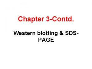 Chapter 3 Contd Western blotting SDSPAGE Western Blot