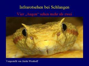 Infrarotsehen bei Schlangen Vier Augen sehen mehr als