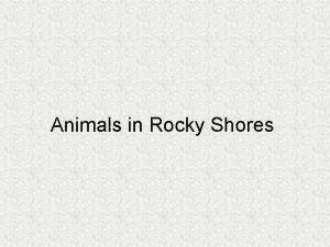 Animals in Rocky Shores Rocky Shores consist of