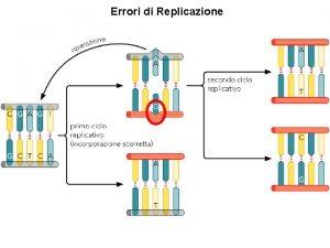Errori di Replicazione La manutenzione del materiale genetico