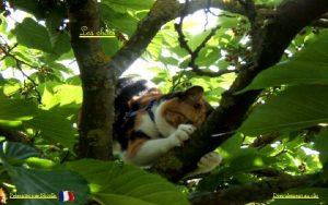 Les chats Prsents par Nicolle Droulement au clic