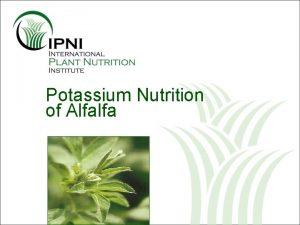 Potassium Nutrition of Alfalfa Potassium K Nutrition of