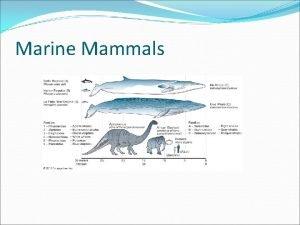 Marine Mammals Key Concepts Mammals have a body