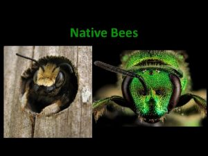 Native Bees An Essential Service Pollination Did you