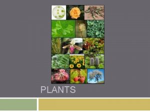 PLANTS What are plants Eukaryotic have a nucleus