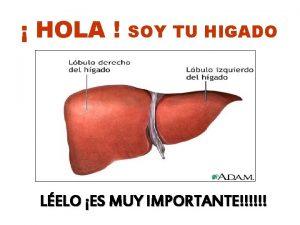 HOLA SOY TU HIGADO LELO ES MUY IMPORTANTE