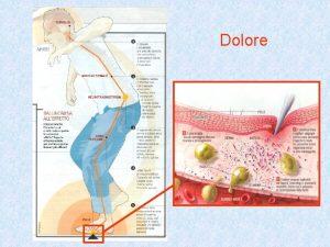 Dolore Dolore EPIDEMIOLOGIA Lorganizzazione ene Sanit v della