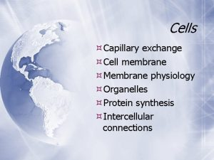 Cells Capillary exchange Cell membrane Membrane physiology Organelles
