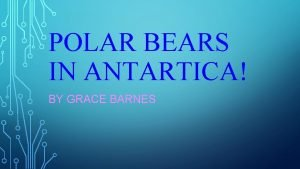 POLAR BEARS IN ANTARTICA BY GRACE BARNES POLAR
