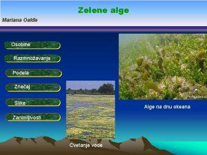 Zelene alge Mariana Oale Osobine Razmnoavanje Podela Znaaj
