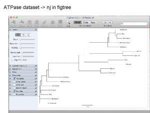 ATPase dataset nj in figtree ATPase dataset nj