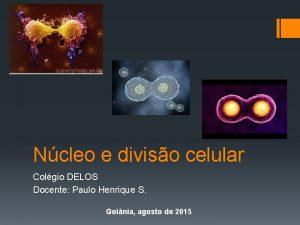 Ncleo e diviso celular Colgio DELOS Docente Paulo