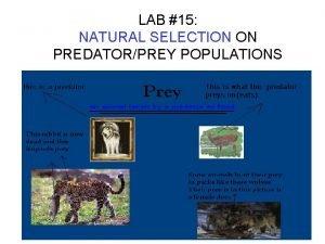 LAB 15 NATURAL SELECTION ON PREDATORPREY POPULATIONS PROBLEM