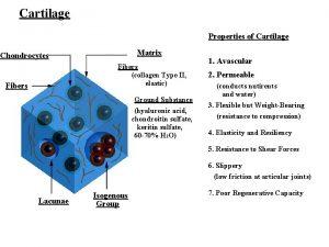 Cartilage Properties of Cartilage Matrix Chondrocytes Fibers collagen