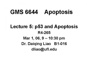 GMS 6644 Apoptosis Lecture 5 p 53 and