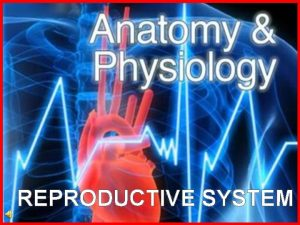 REPRODUCTIVE SYSTEM What is the reproductive system The