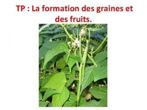 TP La formation des graines et des fruits