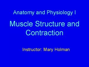 Anatomy and Physiology I Muscle Structure and Contraction