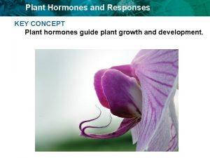 Plant Hormones and Responses KEY CONCEPT Plant hormones