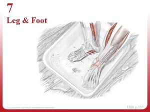 7 Leg Foot Topographical Views Topographical Views Exploring