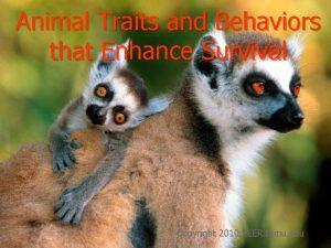 Animal Traits and Behaviors that Enhance Survival Copyright