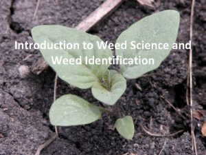 Introduction to Weed Science and Weed Identification Definition