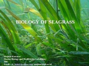 BIOLOGY OF SEAGRASS Mujizat Kawaroe Marine Biology and