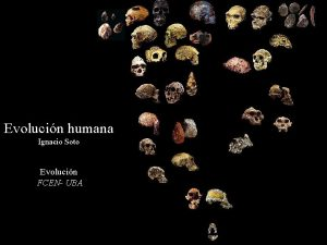 Evolucin humana Ignacio Soto Evolucin FCEN UBA Historia