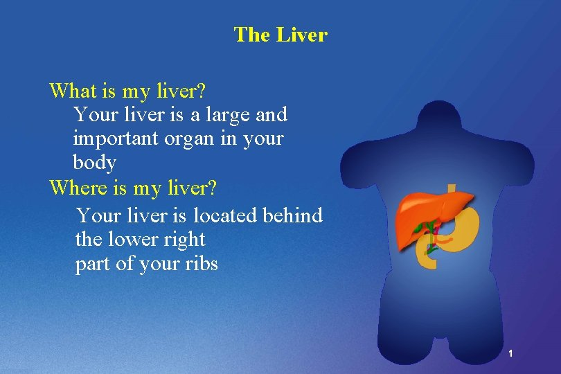 The Liver What is my liver Your liver