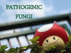 PATHOGENIC FUNGI Medical mycology field of medicine concerned