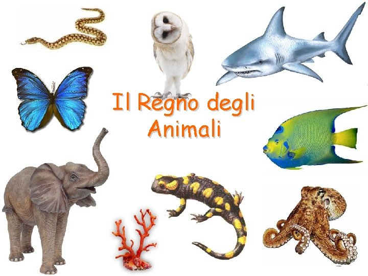 Il Regno degli Animali Il Regno degli Animali