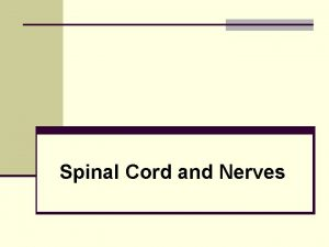 Spinal Cord and Nerves The Nervous System n