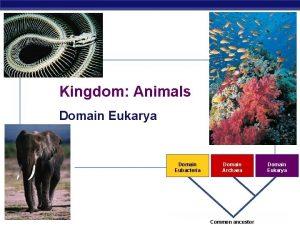 Kingdom Animals Domain Eukarya Domain Eubacteria AP Biology