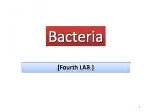 Bacteria Fourth LAB 1 What are Bacteria Bacteria
