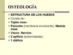OSTEOLOGA n ESTRUCTURA DE LOS HUESOS Consta de