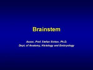 Brainstem Assoc Prof Stefan Sivkov Ph D Dept