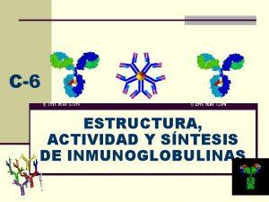 C6 ESTRUCTURA ACTIVIDAD Y SNTESIS DE INMUNOGLOBULINAS Estructura