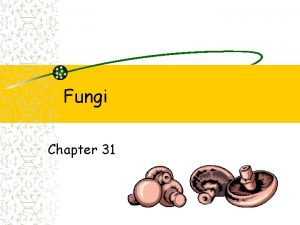 Fungi Chapter 31 Fungi Fungi Fungi Fungi More