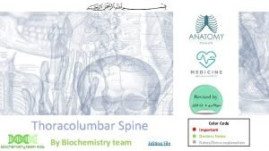 Thoracolumbar Spine By Biochemistry team Editing File Color