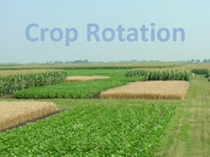 Crop Rotation Crop Rotation Growing plants with different