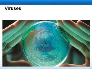 Viruses Learning Objectives Explain how viruses reproduce Explain