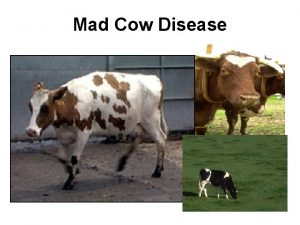 Mad Cow Disease Effects of Mad Cow disease